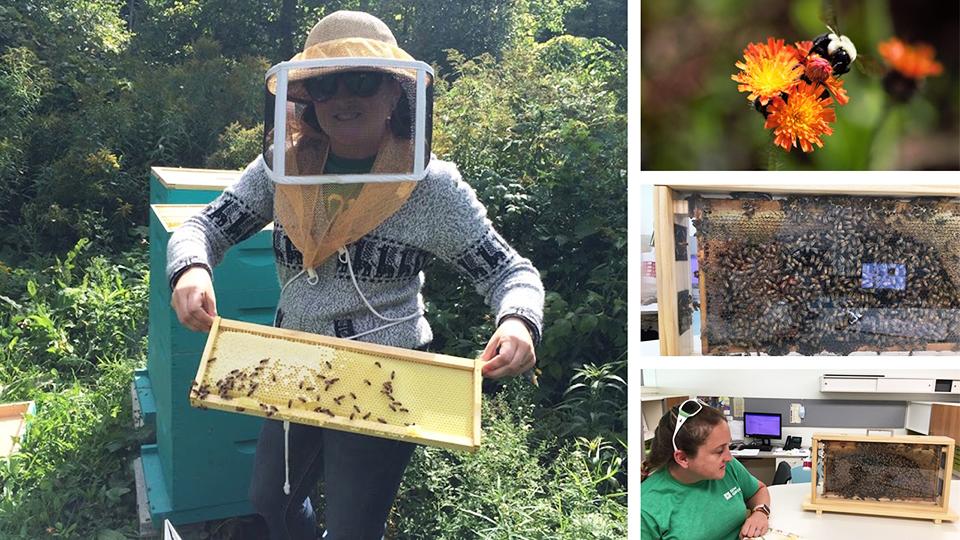 Image of Dow Gardens entomologist Elly Maxwell.