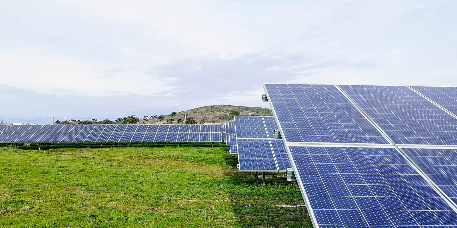Image of Solar Panels in Field