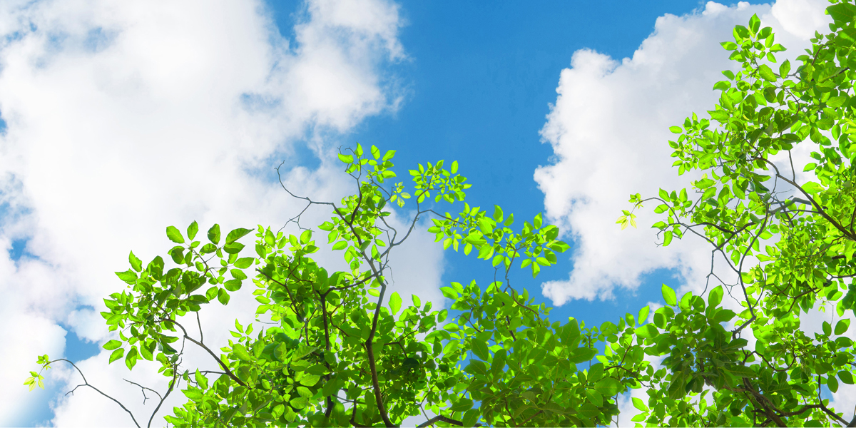 Image of trees and sky